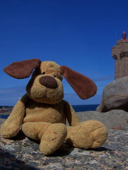 Hondje in Bretagne, tijdens een wandeling langs de kust (2011)