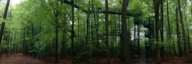 Wandelen tussen de bomen… op hoogte!