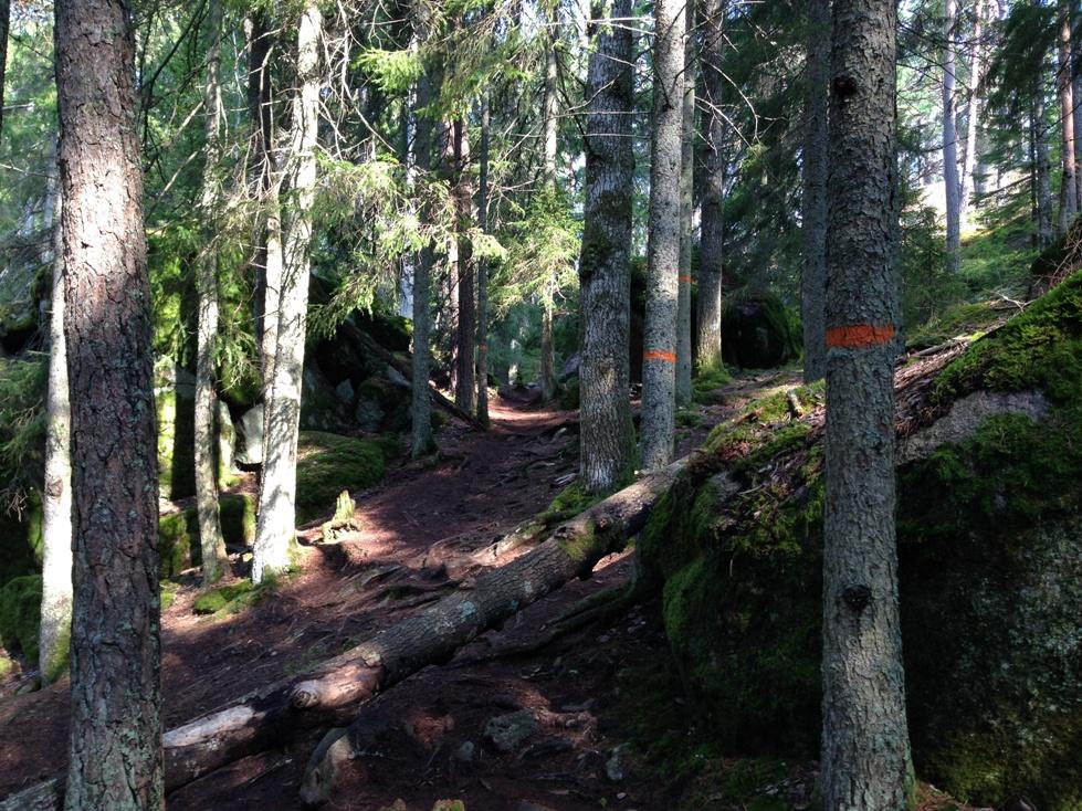 De route door Nationaal Park Tiveden is gemarkeerd met oranje verf op de bomen en de rotsen
