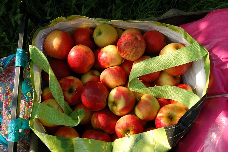 Vakantie met kinderen, kids er op uit, adoptie, appelboom, appels, plukken, boomgaard, plezier, kilo