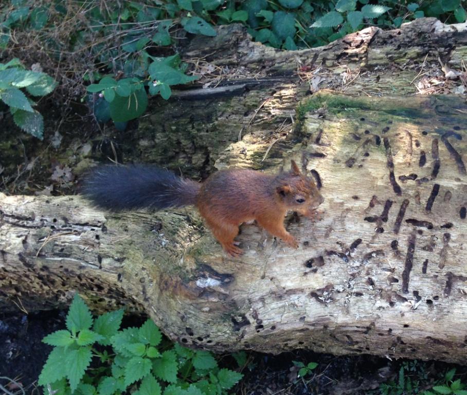Zo leuk, dit eekhoorntje zagen we later bij iemand uit de hand eten.