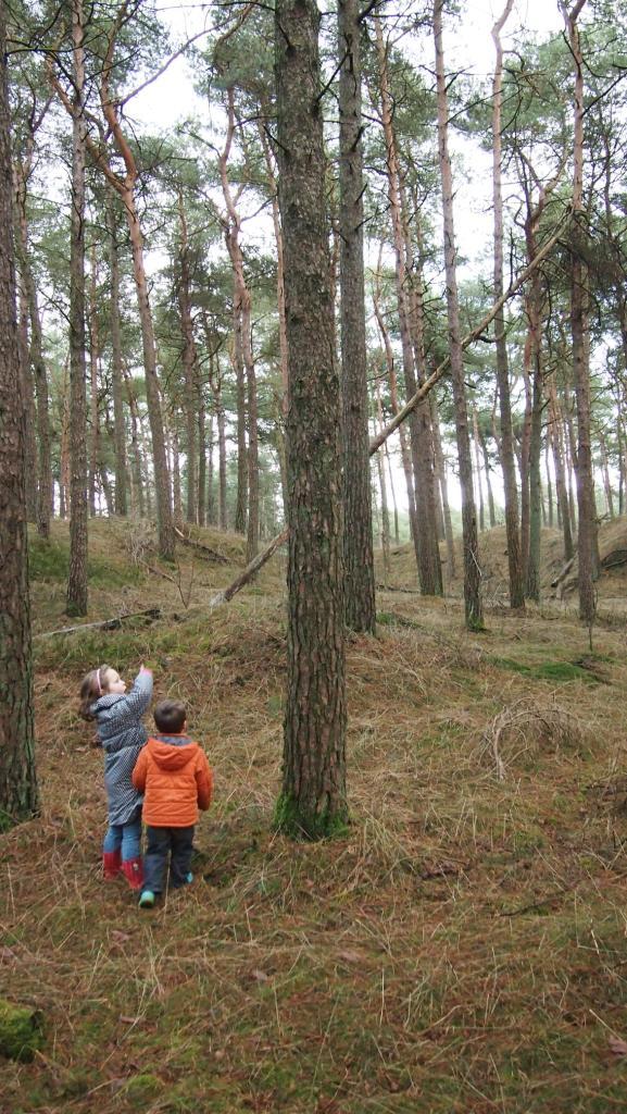 De route gaat voor een deel door het dennenbos.