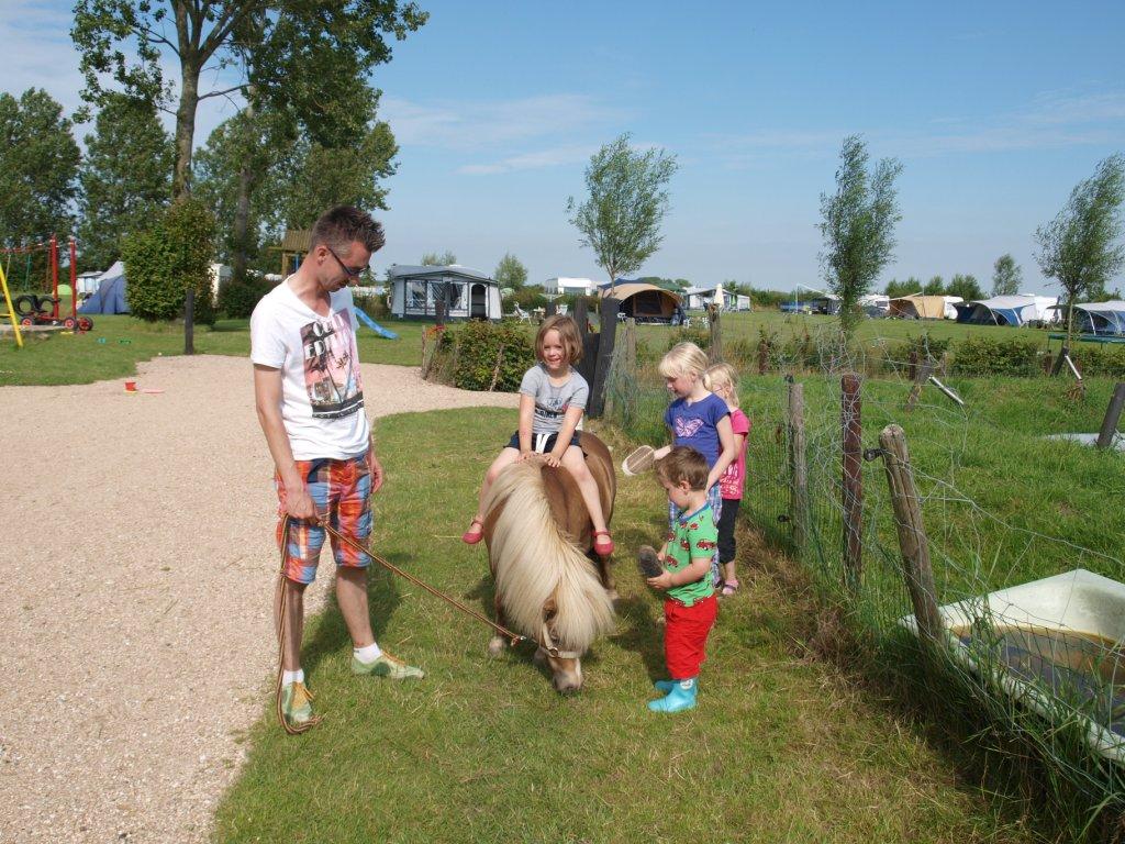 De pony op De Oosthoek: borstelen en rijden wanneer je wilt.
