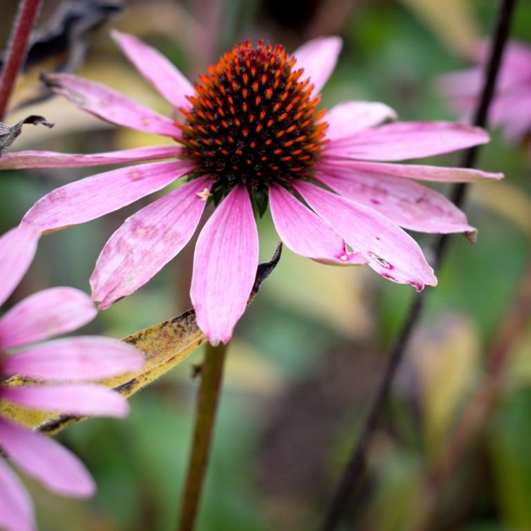 Spelen midden in de natuur, inclusief prachtige bloemen.
