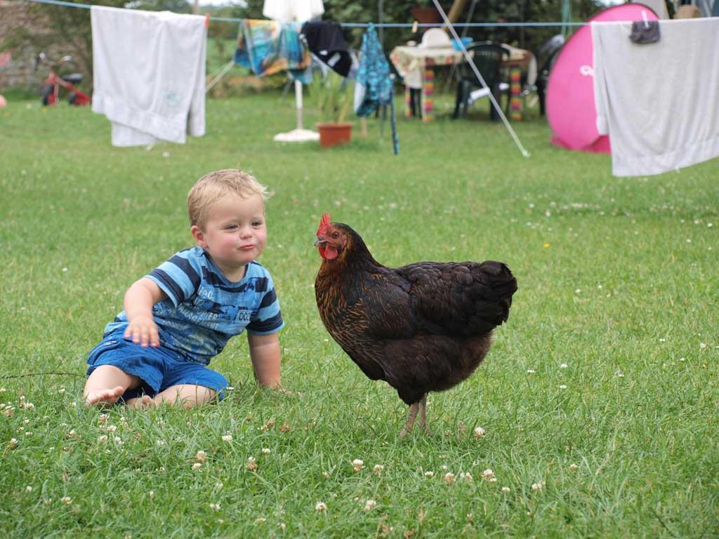 De kippen. Als je aan het eten was aten ze alles op wat op de grond viel.