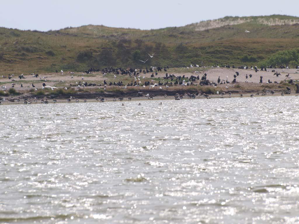 Vogels in natuurgebied Zwanenwater.