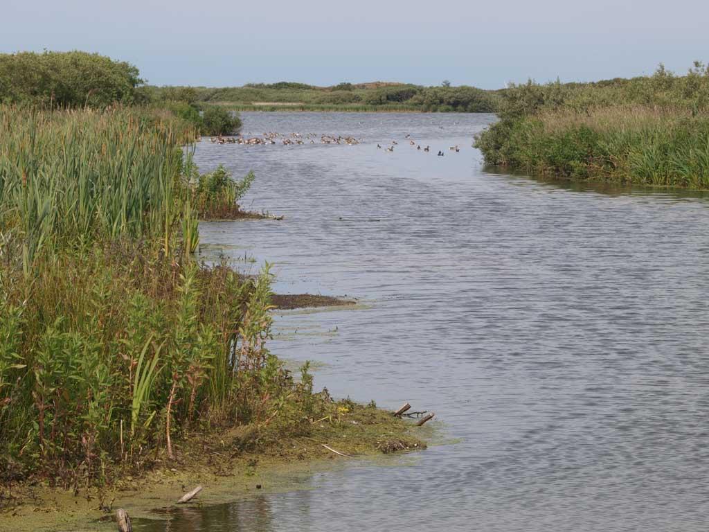 Duinen, bloemen, vogel en water in natuurgebied Zwanenwater.
