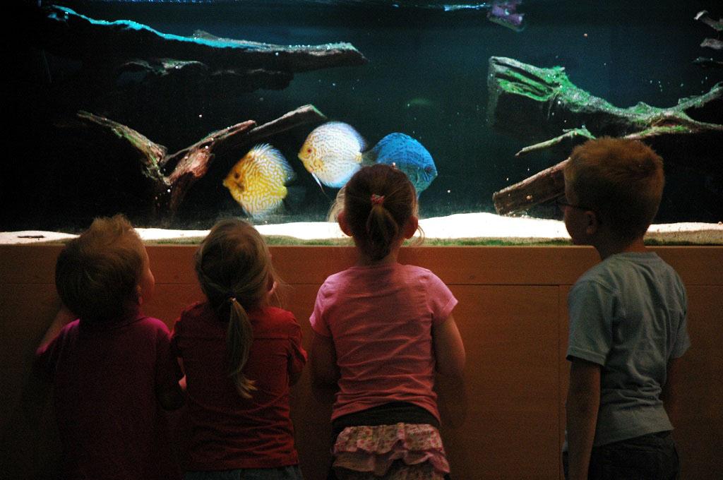 Gluren naar de vissen in het aquarium.