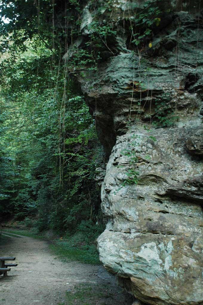 Vanaf de camping loop je zo het bos in.