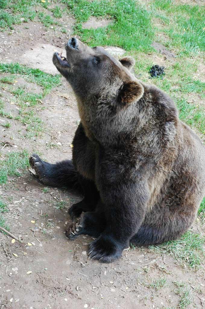 Er zijn ook beren.