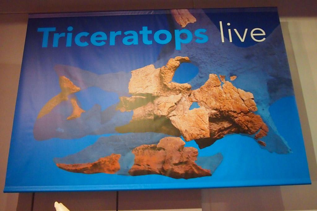 Triceratops wordt live gereconstrueerd