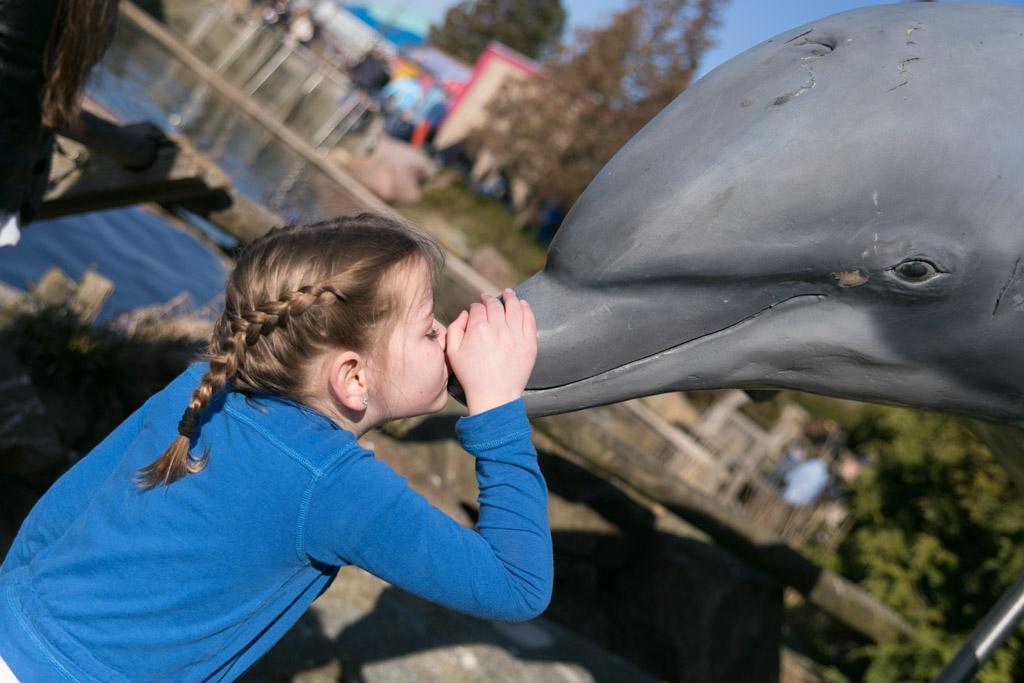 Liefde voor de dolfijnen.