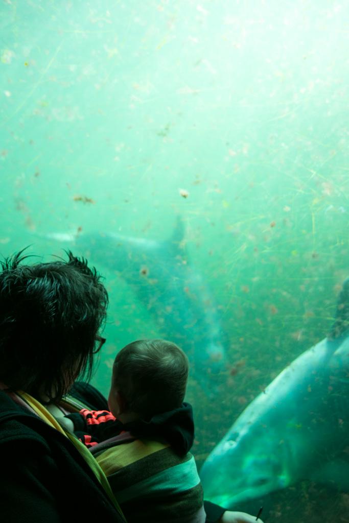 Naar de dolfijnen kijken bij de Odiezee.