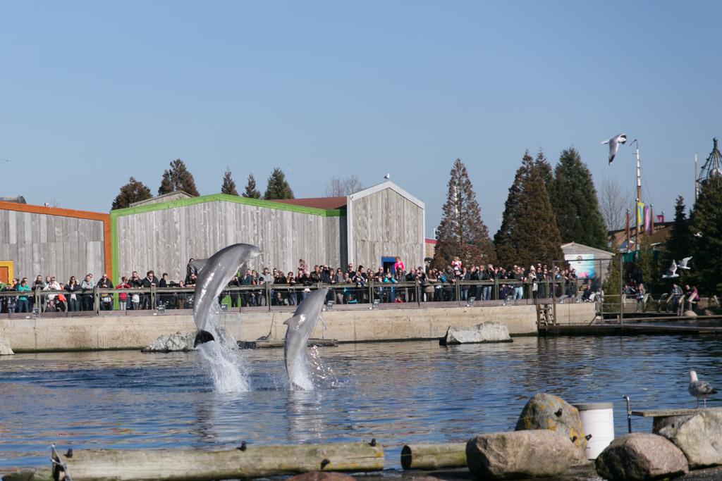 Show in de dolfijnendelta.