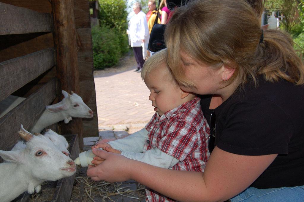 De geitjes een flesje geven bij geitenboerderij Het Geertje.