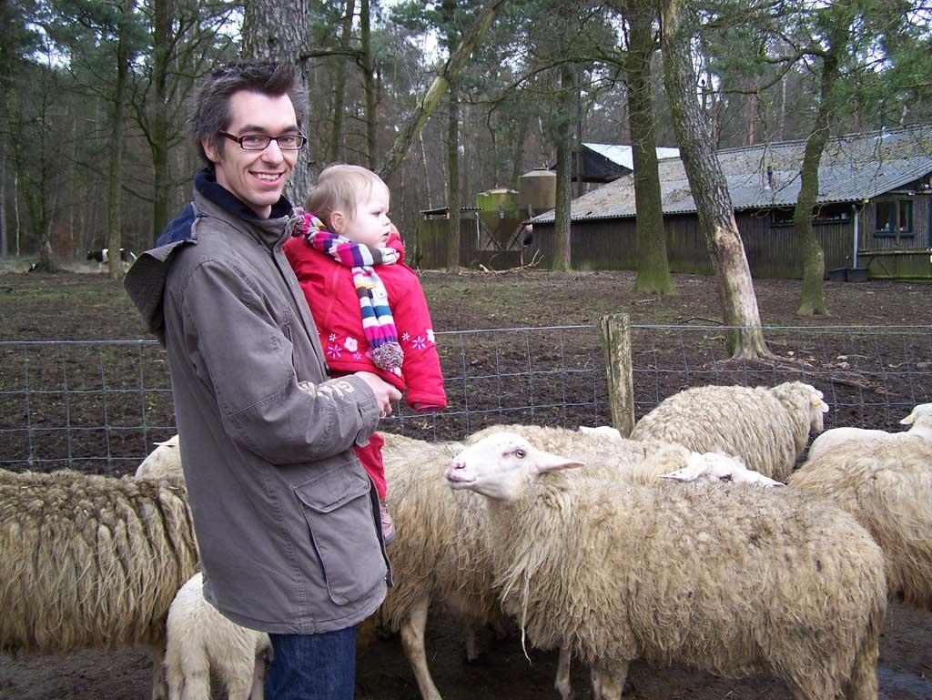 Veilig bij papa op de arm naar de schaapjes kijken.