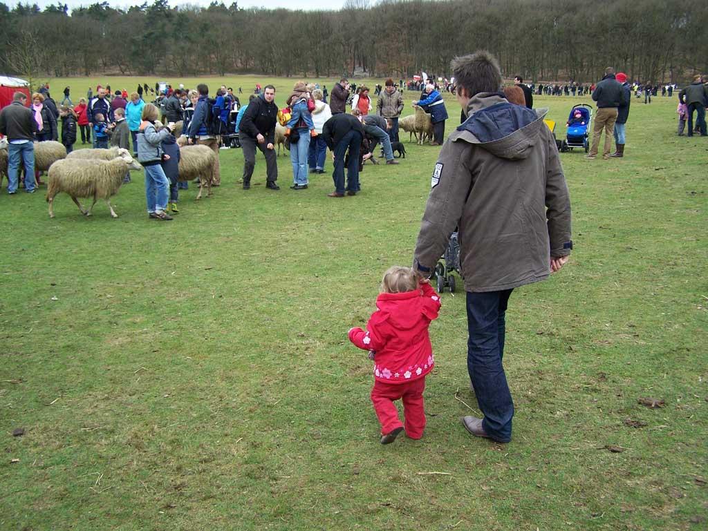 Zelf aan de hand naar de schapen lopen.