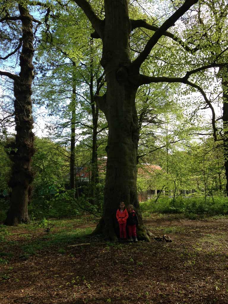 Speeltuin Groenendaal heeft een hele fraaie ligging en dan kom je zomaar dit soort grote bomen tegen.