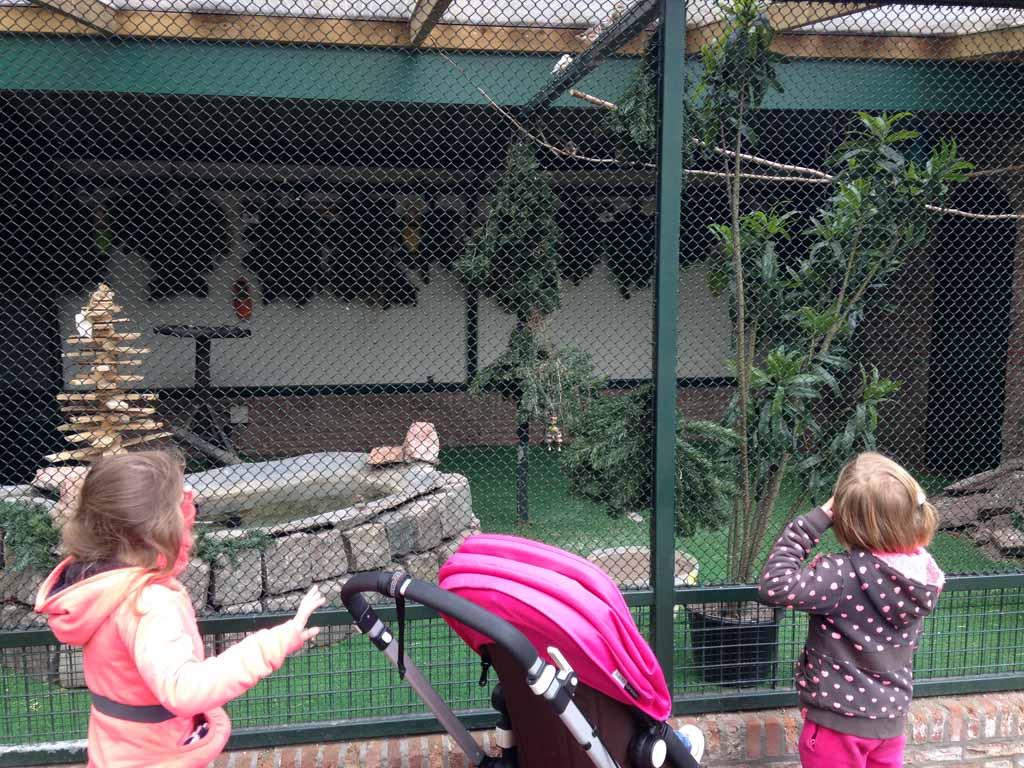 Vogeltjes kijken bij kinderboerderij 't Molentje vlakbij speeltuin Groenendaal.