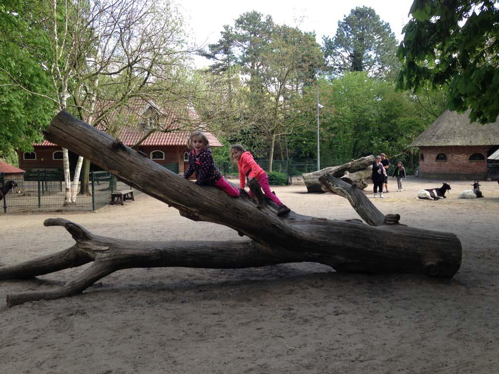 Ook bij de kinderboerderij kan er geklommen worden.