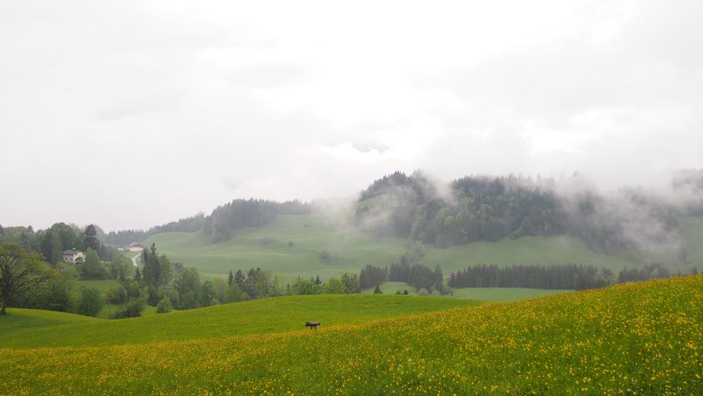 De weides bieden veel ruimte rondom het Gasthof en in de winter kan je in de directe omgeving ook skiën.