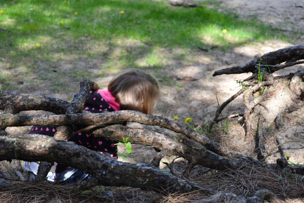 Tussen de wortels van een boom.