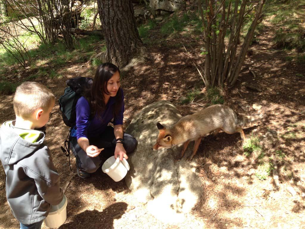 Indrukwekkend... we hebben nog nooit van zo dichtbij een vos gezien.
