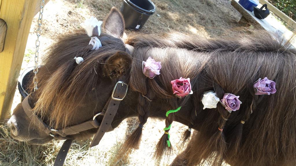 Roosje de 'disco-pony'.
