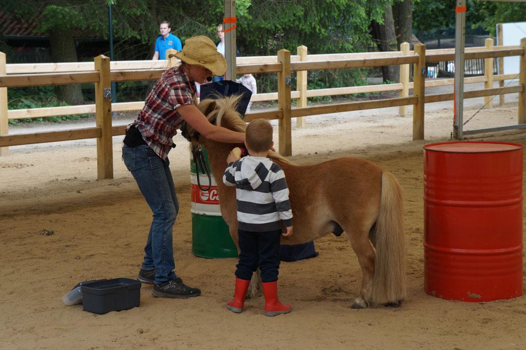 Kennismaking met de pony's.