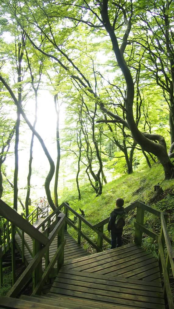 De trap naar het strand bij de witte krijtrotsen is de langste trap van Denemarken.