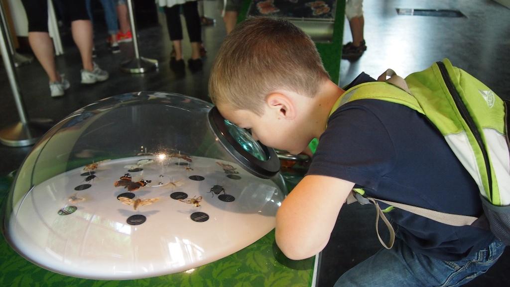 Door een vergrootglas zien zelfs kleine dieren er indrukwekkend uit.