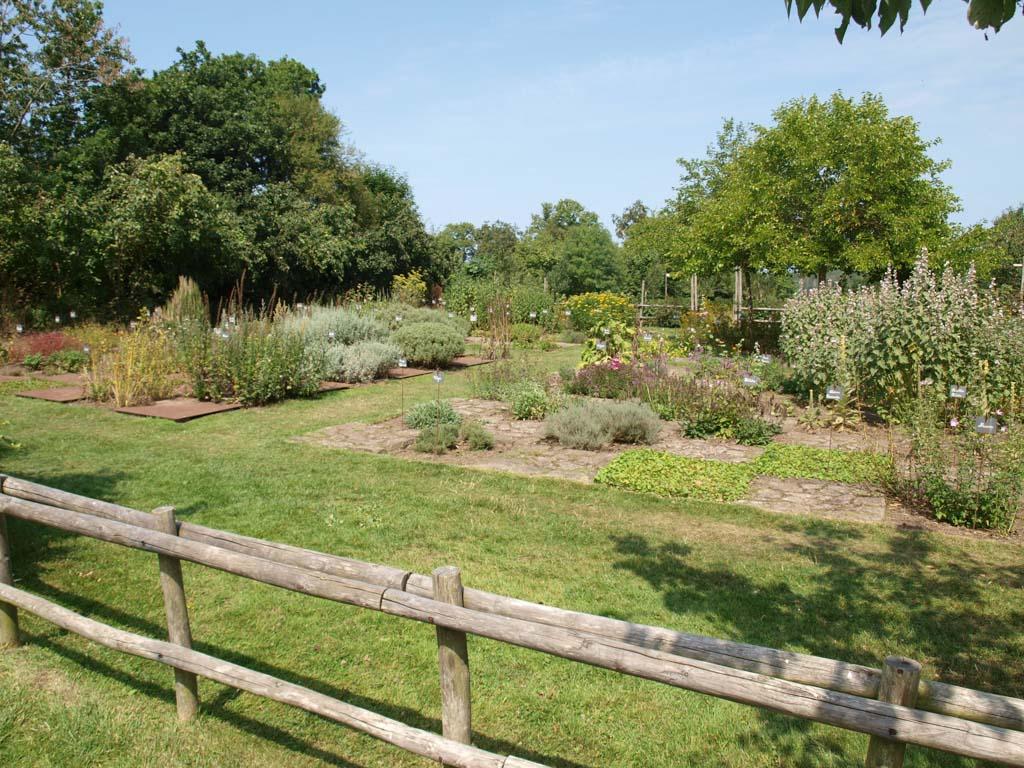 Ondanks de warme zomer is de tuin erg groen.