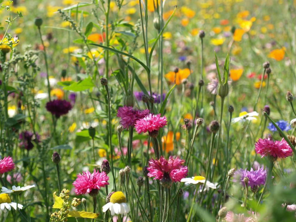 Prachtige wilde bloemen!