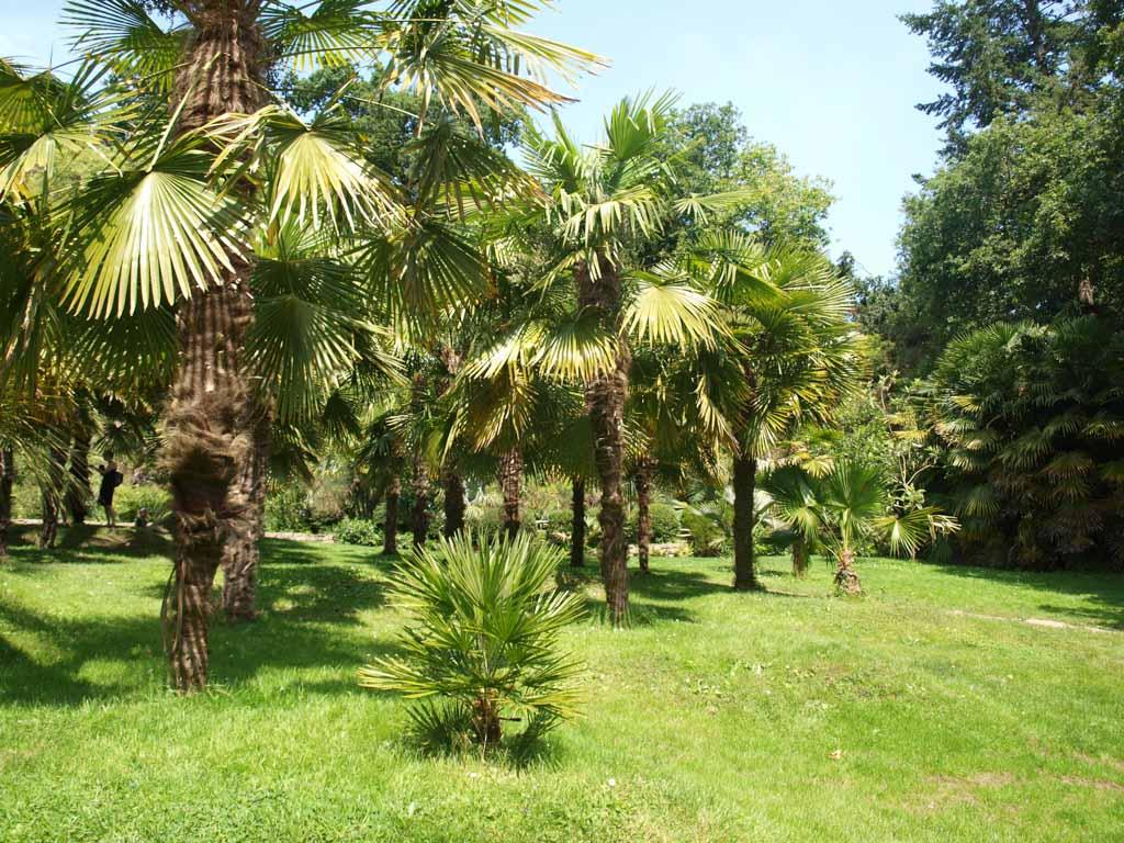 We zien zelfs palmbomen!