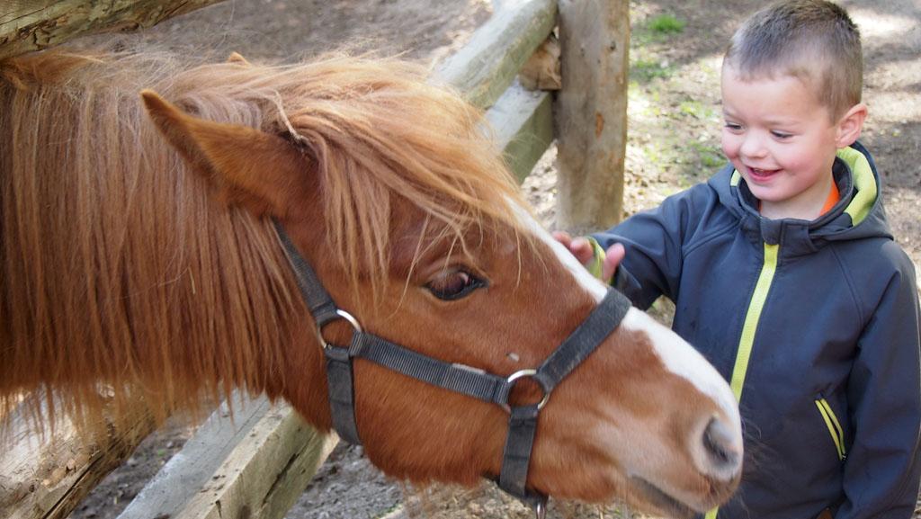Voorzichtig en blij een van de grotere pony's aaien.