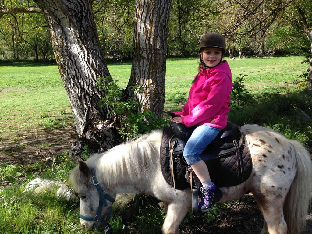 De pony van Maureen lust ook gras maar luisterde beter.