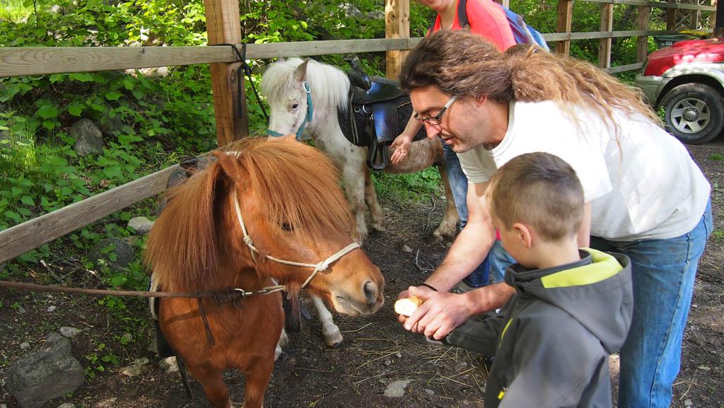 Voordat we weggingen mochten Maureen en Camiel de pony's nog iets te eten geven. En ja, ook dat aten ze op!