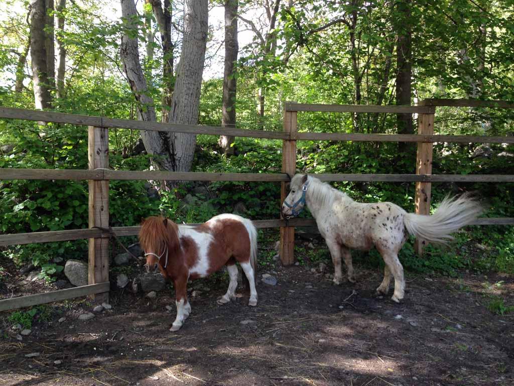Meet the pony's!