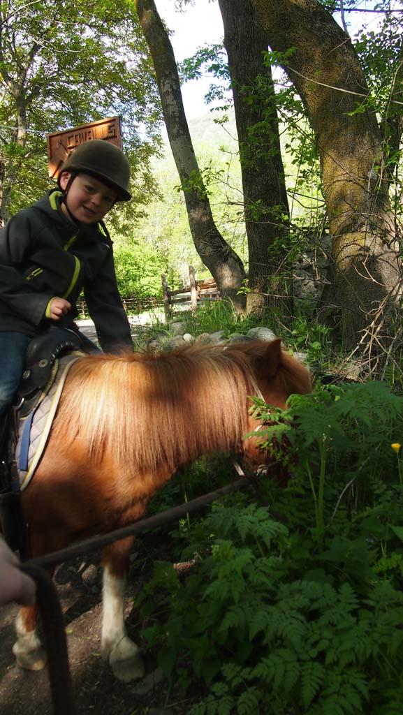 De gras-etende pony van Camiel.