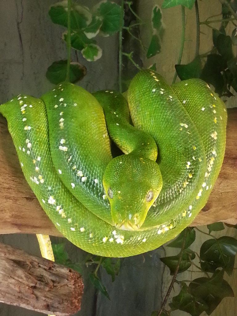 Een van de vele slangen.