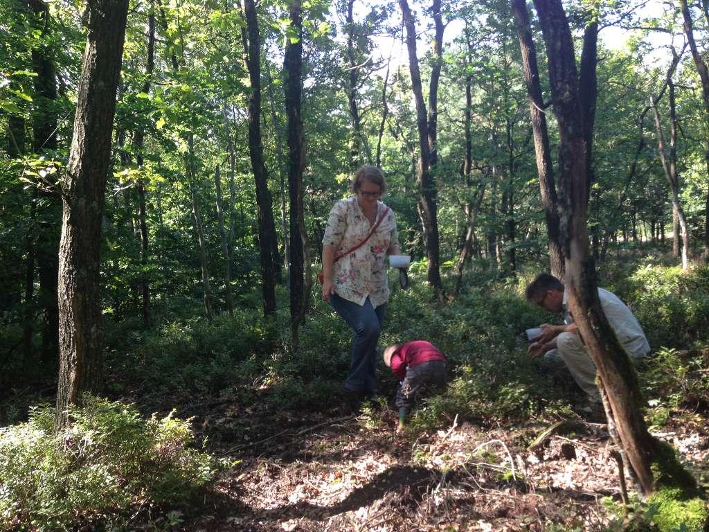 De struikjes zijn laag bij de grond, dus makkelijk om te plukken voor kleinere kinderen.