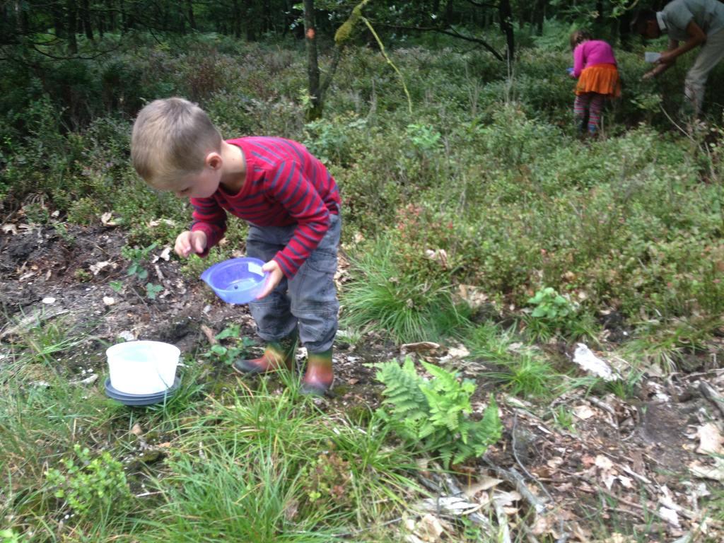 De kinderen plukken met een klein bakje en we verzamelen alle bosbessen in een grotere bak met deksel.