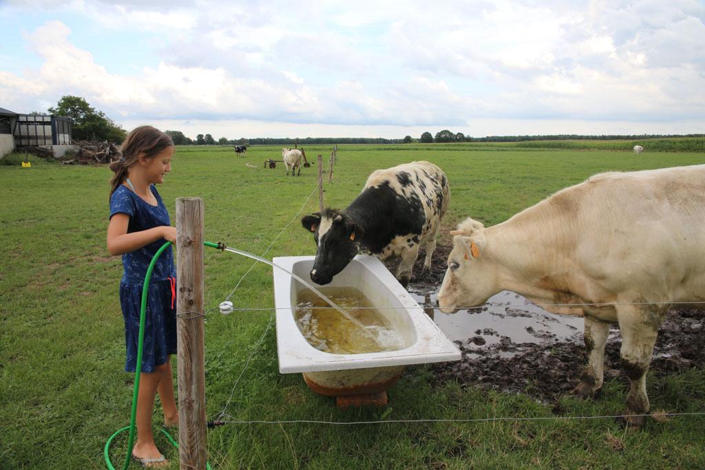 Fiene zorgt goed voor de koeien.