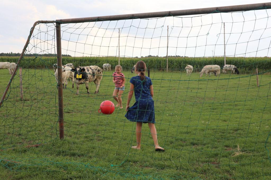 Potje voetballen met de koeien ;-)