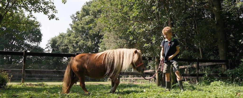 De Eekhorst kindercoaching met paarden