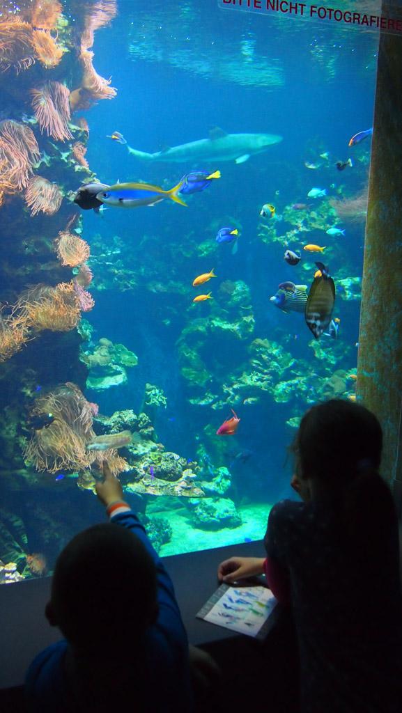 Blijft mooi: een aquarium met kleurrijke vissen.