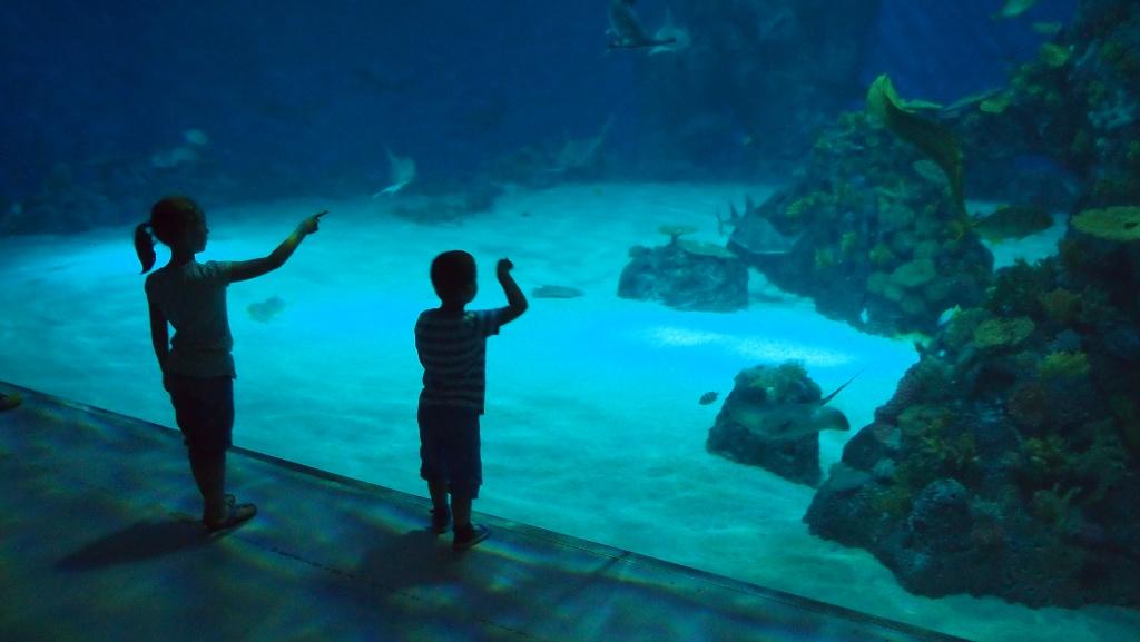 Geopend sinds 2013: Den Bla Planet, het aquarium van Kopenhagen.