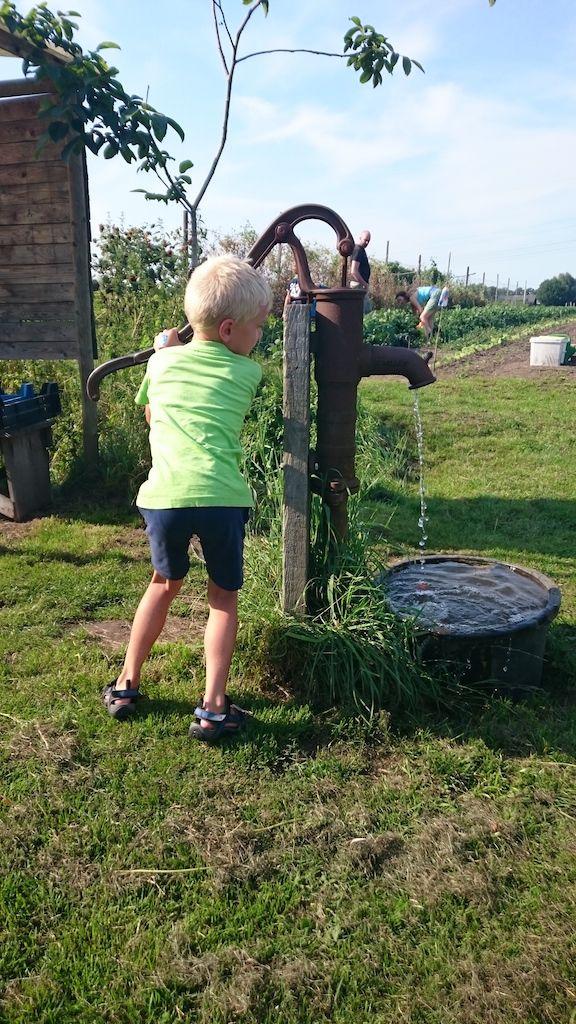 Met de waterpomp spoel je de grond van de groenten.