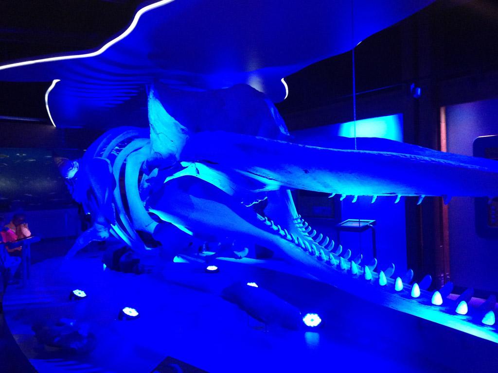 Skelet van een walvis.