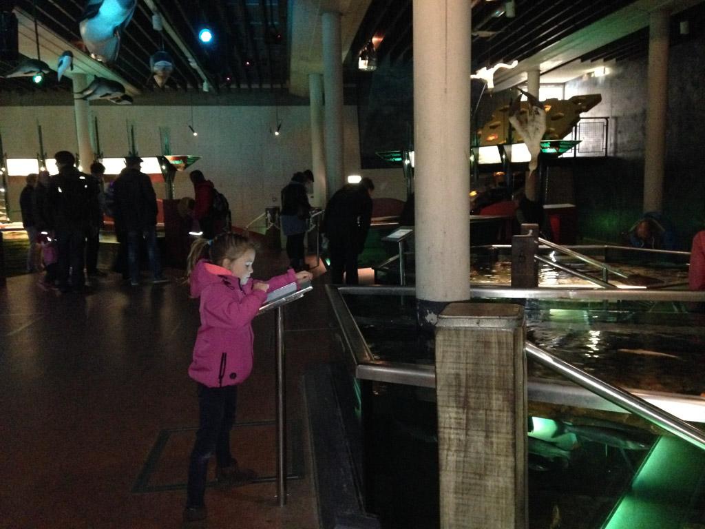 Zelf informatie opzoeken over de dieren in het aquarium.